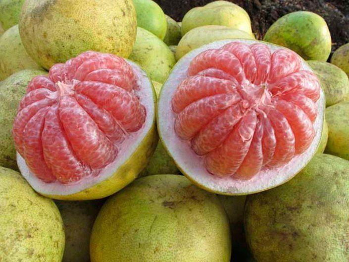 Mejores 244 im genes de frutas y semillas en pinterest for Semillas de frutas y verduras