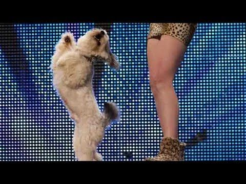 Ashleigh and Pudsey - Britain's Got Talent 2012 audition - UK version   Cutest dog dance ever!