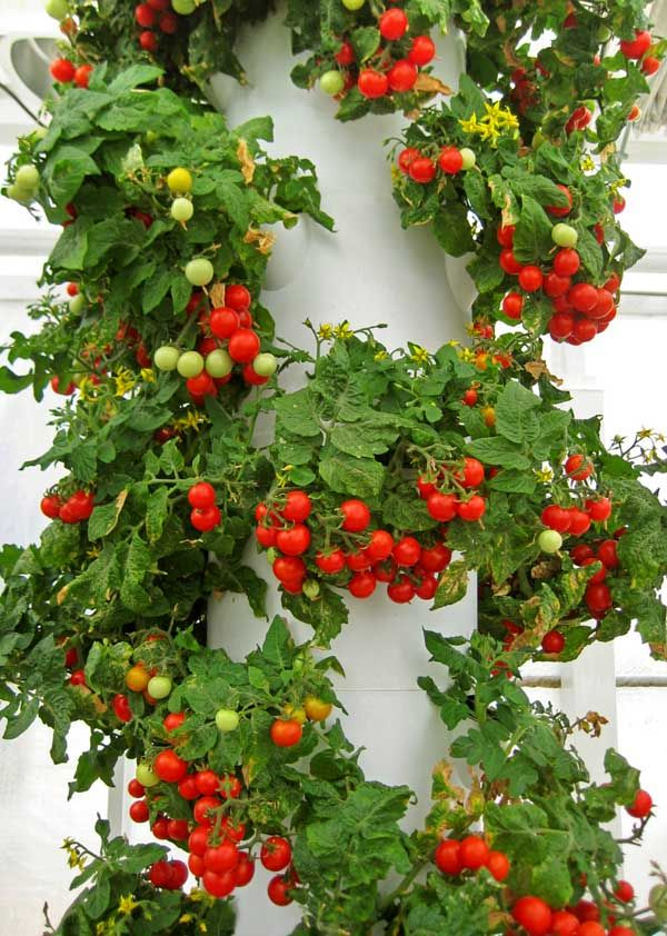 86 best Gardening : Vegetable Gardening : Tower Garden by Juice ...