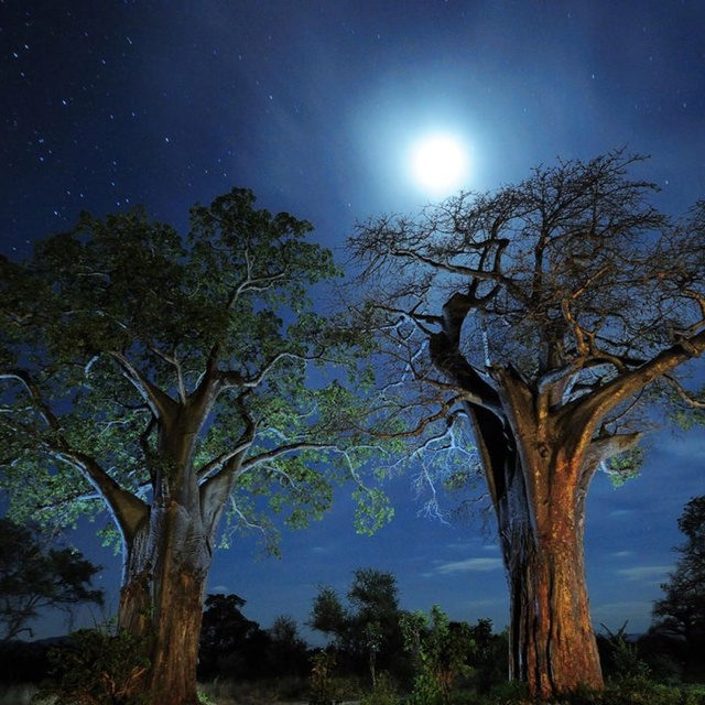 Wild!Moon, Moon, National Geographic, Trees, Photos Tips, National Parks, Landscapes Photos, Africa, Night Sky