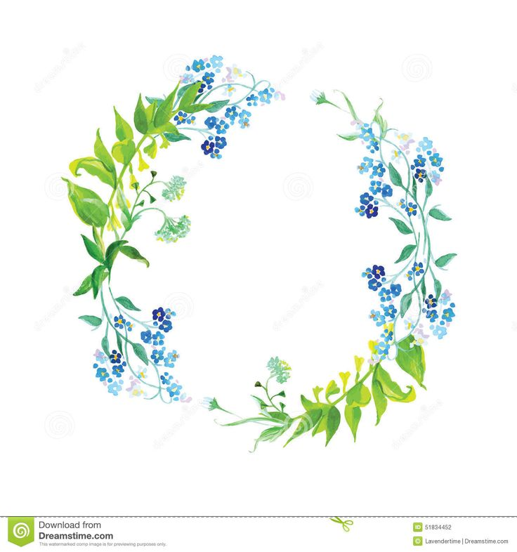 Forget-me-not And Herb Watercolor Round Vector Frame - Download From Over 41 Million High Quality Stock Photos, Images, Vectors. Sign up for FREE today. Image: 51834452