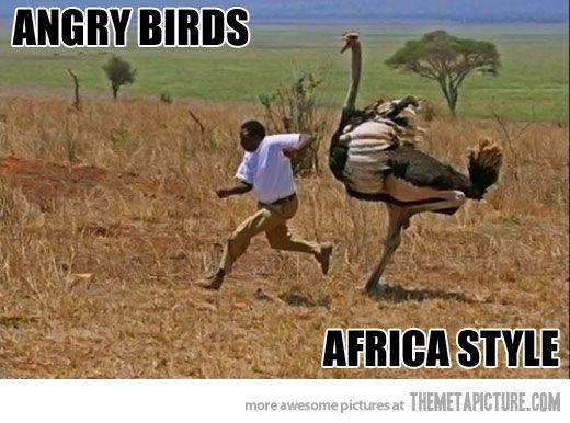 Man Vs Bird