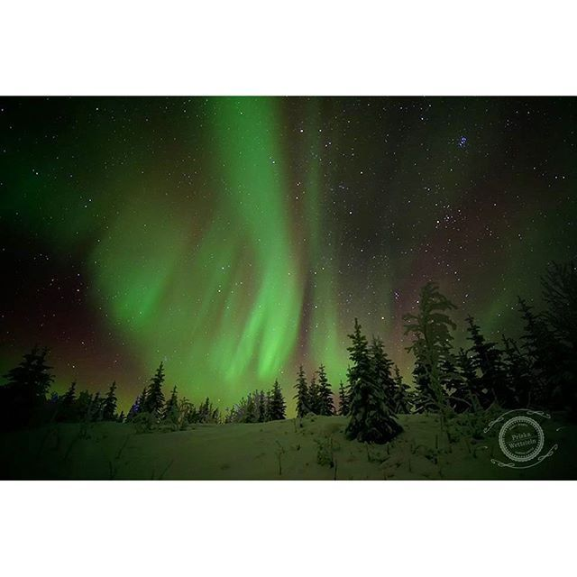 I love our fabulous skies. I was going through some older images and found this one. It's from winter solstice a year ago.  Again, my apologies for not being responsive to comments and likes, I have just no time at all at the moment.  #visitDawson #canadiancreatives #canadianwonders #comeToMyYukon #CanadaProof #enjoycanada #ExploreYukon #Canada #the_true_north #worldaurora #auroraborealis #northernlightsphotos #NorthernLights #nikon_canada #thankyoucanada #oh_canada #canadathenorth…
