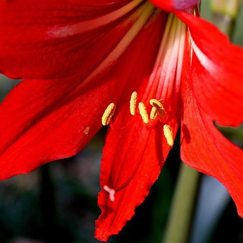 17 Best Images About Garden Checklist March On Pinterest