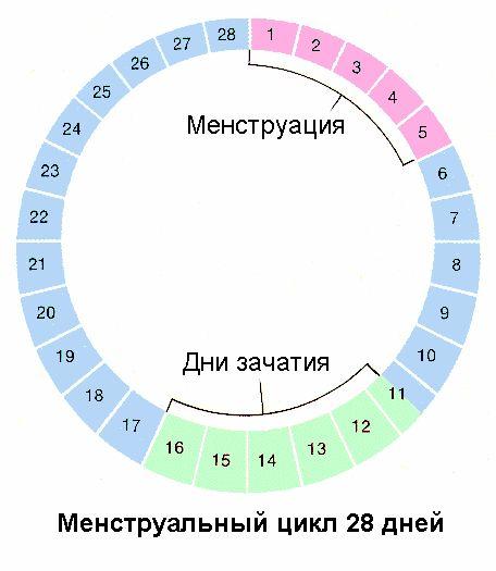 Менструальный цикл и фертильность - http://www.women-info.com/ru/%D0%BC%D0%B5%D0%BD%D1%81%D1%82%D1%80%D1%83%D0%B0%D0%BB%D1%8C%D0%BD%D1%8B%D0%B9-%D1%86%D0%B8%D0%BA%D0%BB-%D0%B8-%D1%84%D0%B5%D1%80%D1%82%D0%B8%D0%BB%D1%8C%D0%BD%D0%BE%D1%81%D1%82%D1%8C/