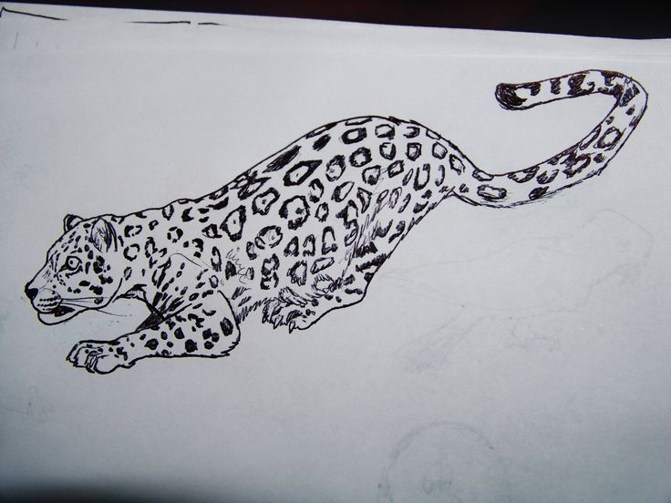 Line Drawing Jaguar : Best my drawings images the o jays