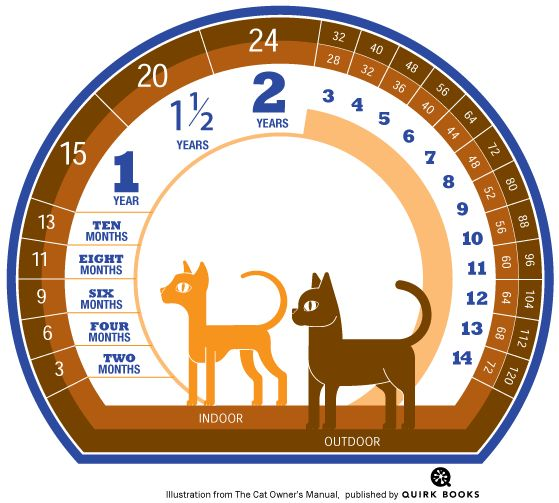 How to Calculate A Cats Age in Cat Years | Catster ☮❥•.¸¸☮❥•.¸¸☮❥•.¸¸☮❥•.¸¸☮❥•.¸¸