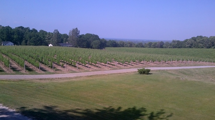 Vineland Estate Winery flowing vineyards