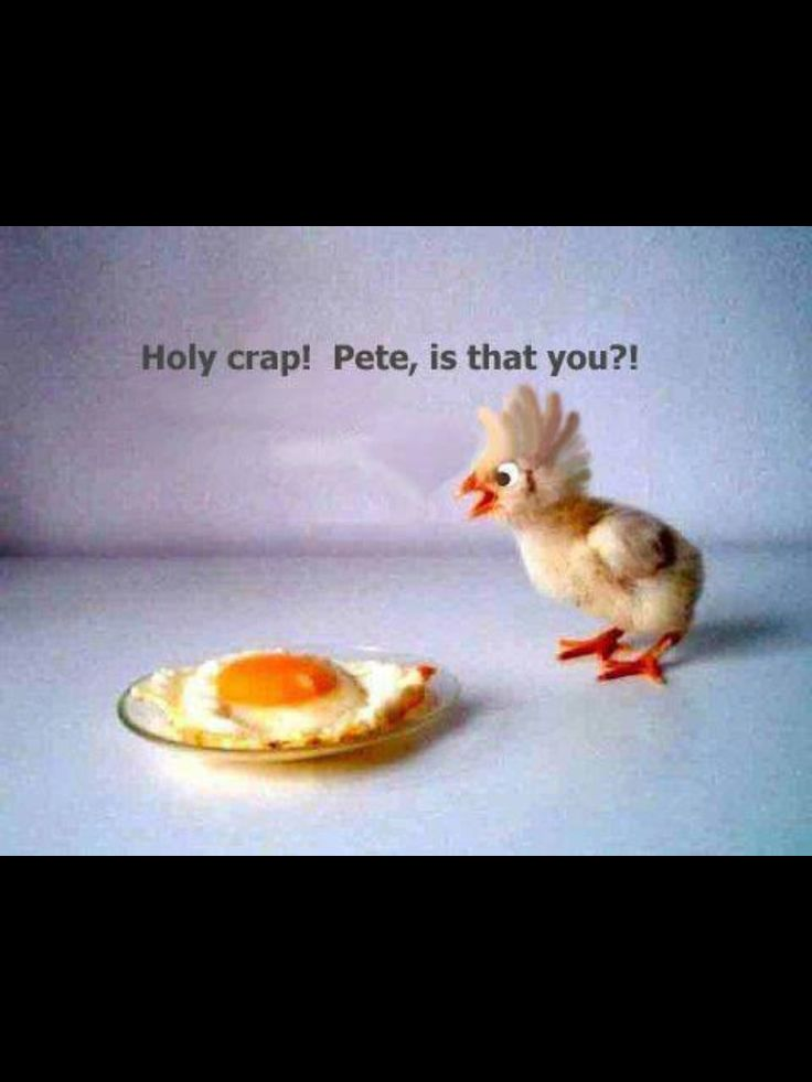 Chick humor