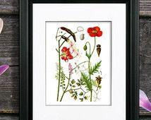 Summer Wall Art, Red Poppy print #11, wildflower plant illustration Botanical art print, living room wall decor print, GnosisBotanical Art