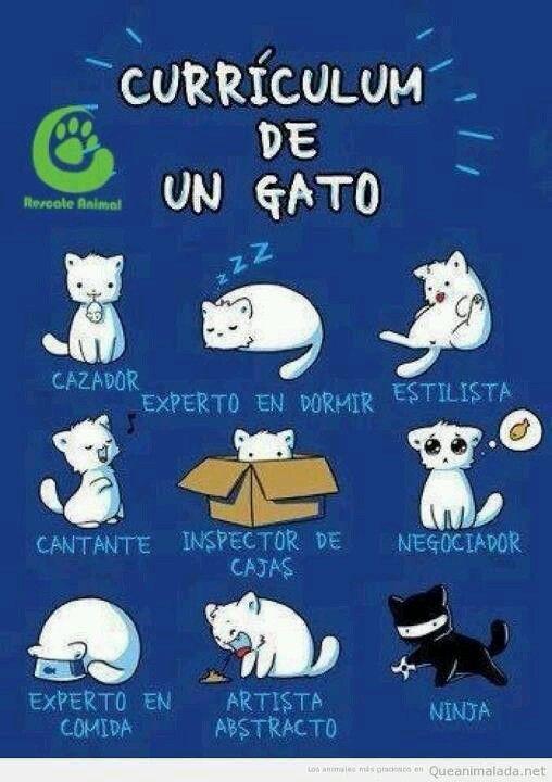 Currículum de un gato.                                                                                                                                                                                 Más