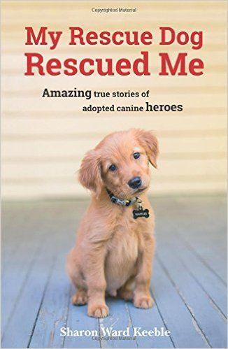 Golden retriever rescue uk east anglia