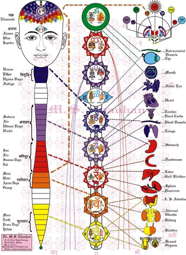 chakras spinal/organ reference