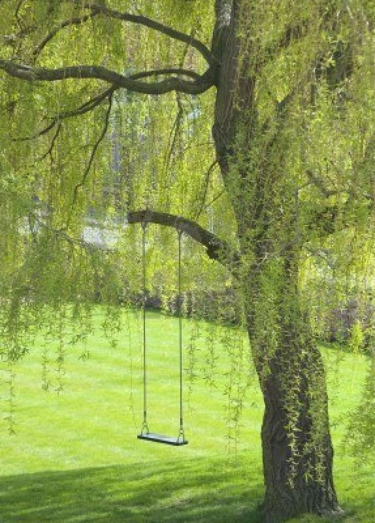 Empty Swing Hangs From Tree Branch In Garden Royalty Free Stock Photo, Pictures, Images And Stock Photography. Image 6638294.