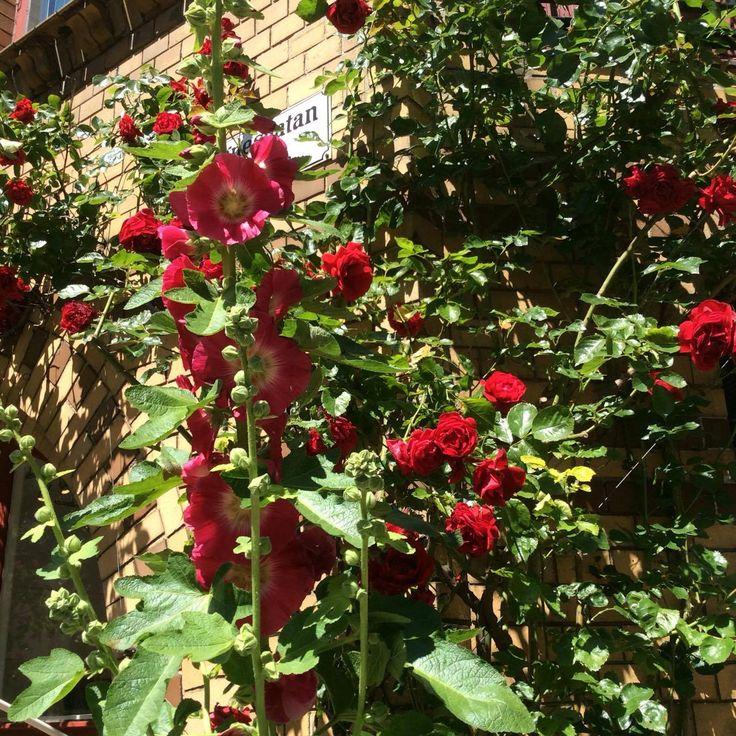 Rosor utanför Filialen Konst & Konsthantverk, Agnesgatan 1