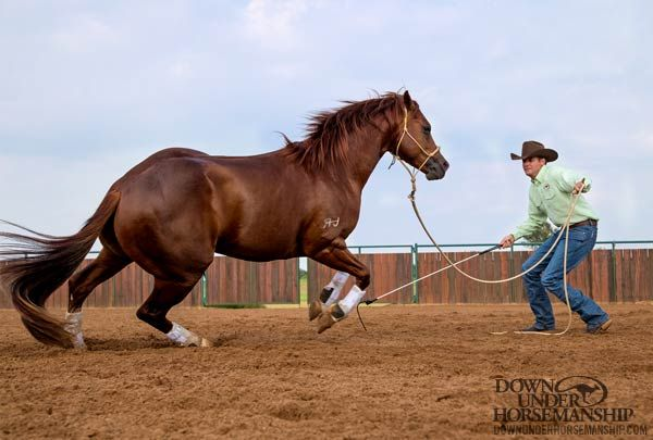 Downunder Horsemanship | Training Tip: There's Only so Much Space Between his Ears