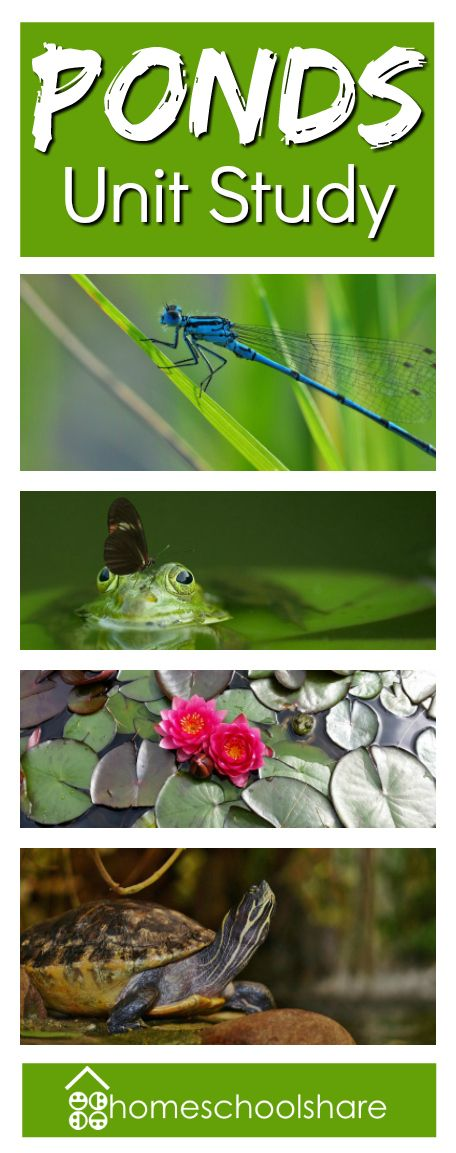 Ponds Unit Study from Homeschool Share; learn about fish, frogs, turtles, dragonflies, and more!