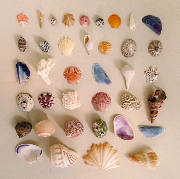 itty bitty sea treasures