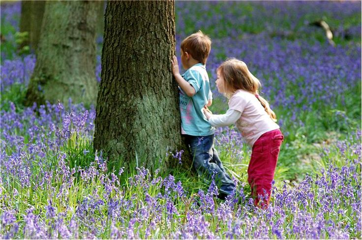 Google Image Result for http://www.woodlandtrust.org.uk/en/about-us/faqs/PublishingImages/children-in-bluebell-wood.jpg