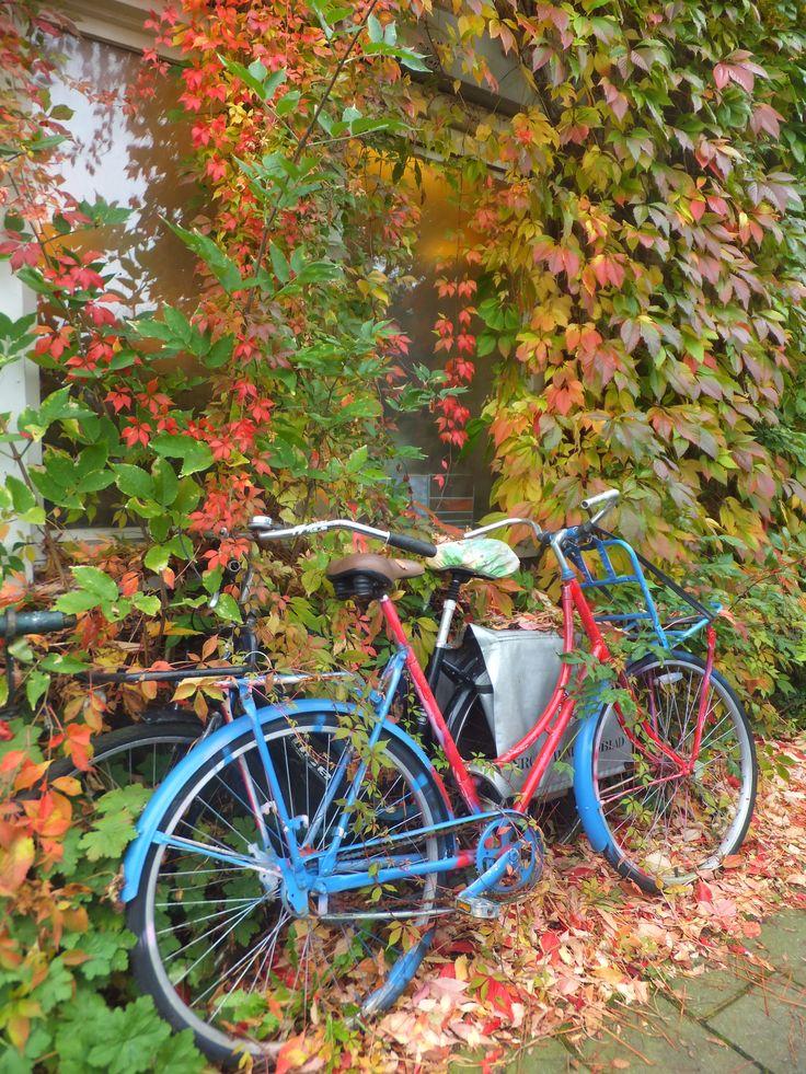 autumn in Amsterdam (by Pingwynne)