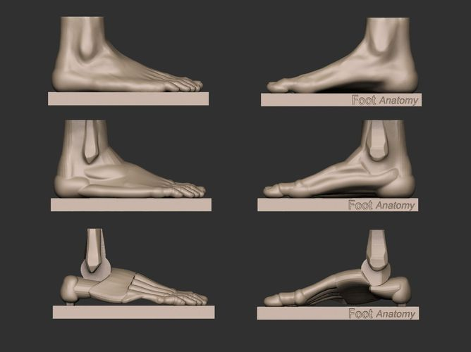 Foot reference for artists