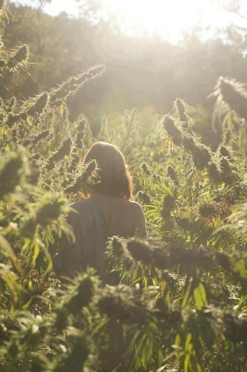 chillin in the garden ( marijuana cannabis )