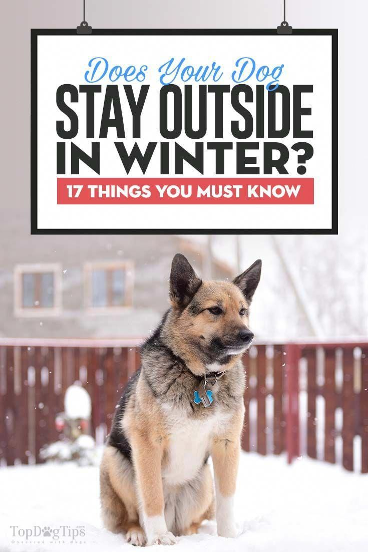 Things To Know When Keeping Dogs Outside In Winter Winter Is Just