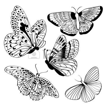 butterflies vector black and white: Állítsa be a pillangók Fekete sziluettek. Butterfly elszigetelt fehér háttérrel. Grafikus ikonok a pillangók. Vektor illusztráció