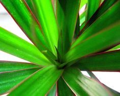 15 Houseplants for Improving Indoor Air Quality