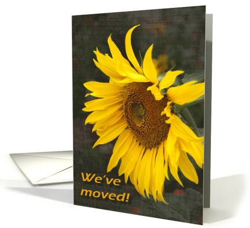 Bright Sunny Sunflower - Moving Announcement card by steppeland