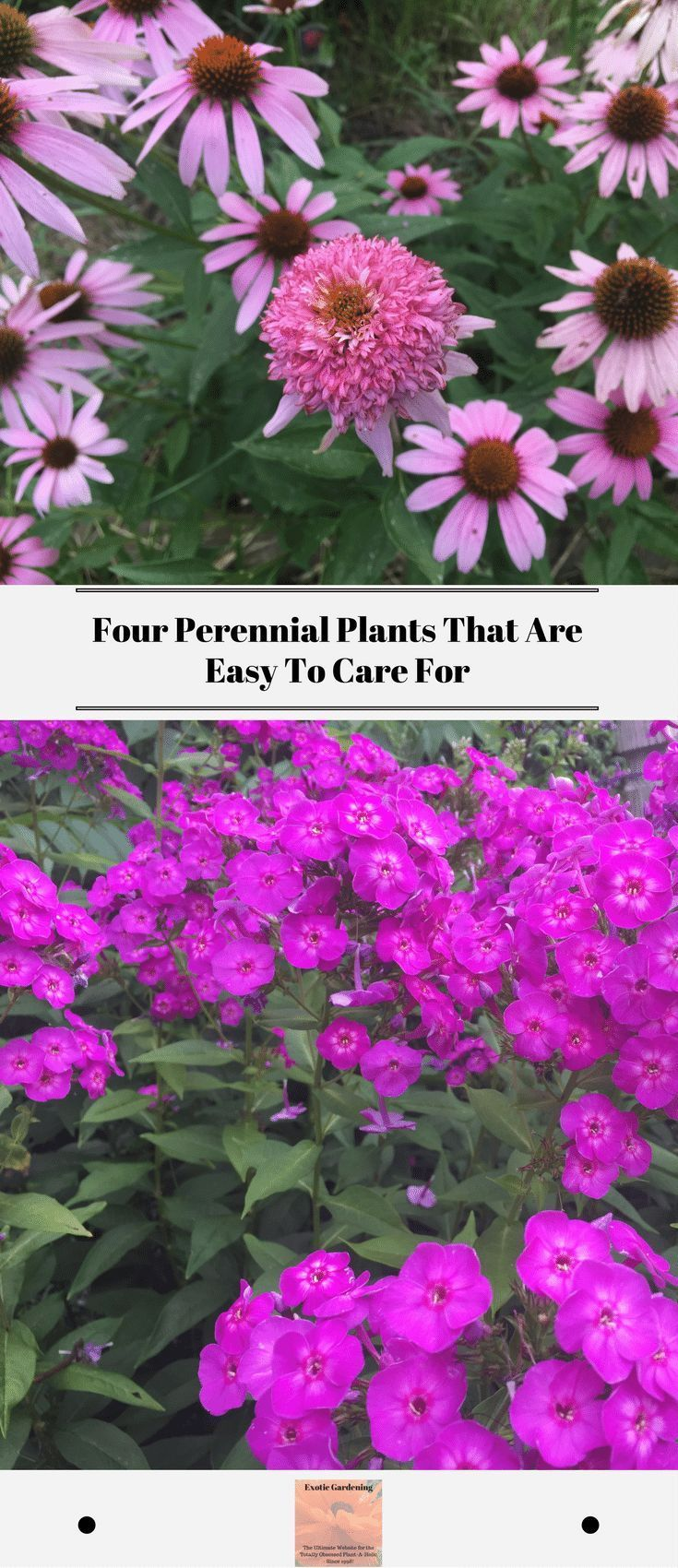 These Four Perennial Flowers Are Easy Plants To Care For They