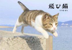 Amazon.co.jp: 飛び猫: 五十嵐 健太