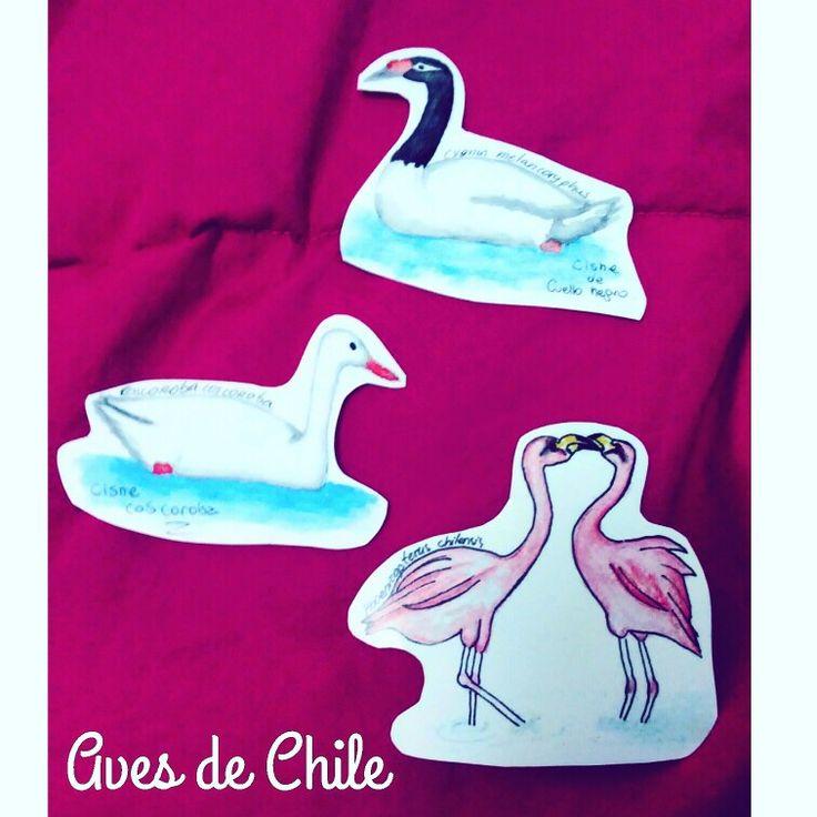 aves chilenas #bird #watercolor