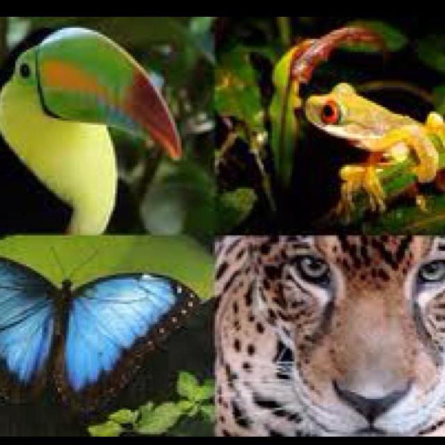 Die besten 25+ Brazilian rainforest Ideen auf Pinterest