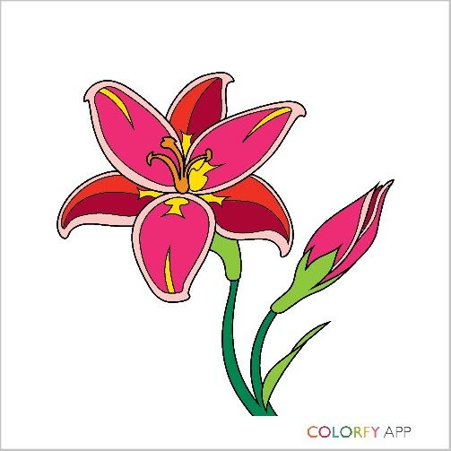 My First Colorfy
