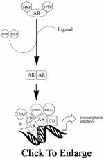 WARRIORS WAREHOUSE: SARM - Selective Androgen Receptor ModulatorSelec...