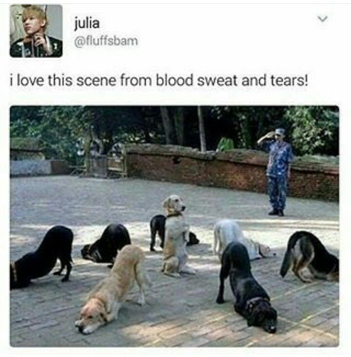 Lmfao blood sweat & tears dog version