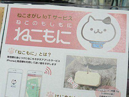 iPhoneで迷い猫を探す「ねこもに」が販売中、「ペット探偵」の保険付き