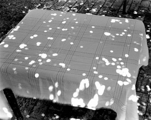 abelardo morell. sunspots on covered table