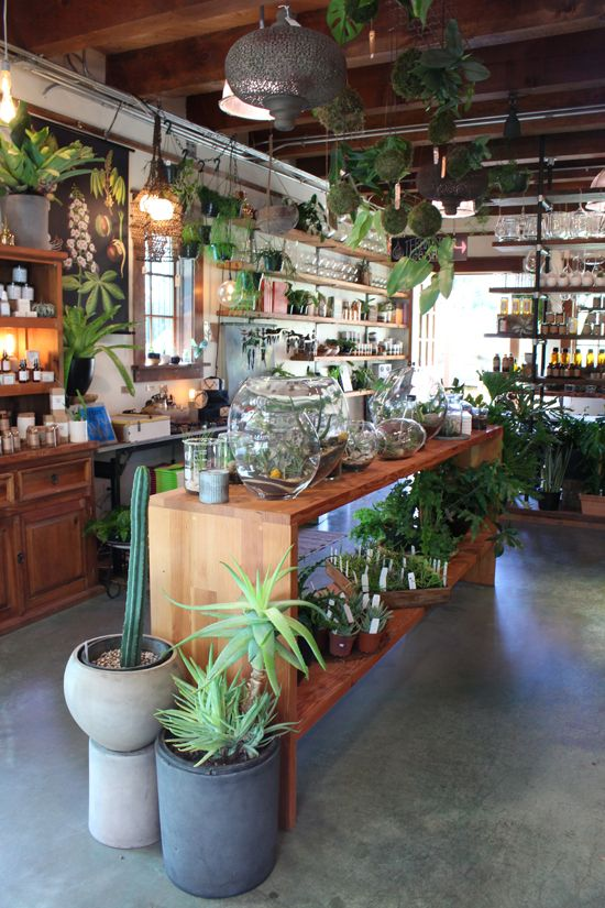 Pistils Nursery is located at 3811 N Mississippi Avenue and is open 11AM–7PM every day or shop online. You can also follow Pistils on Facebook and @pistilsnursery on Instagram.