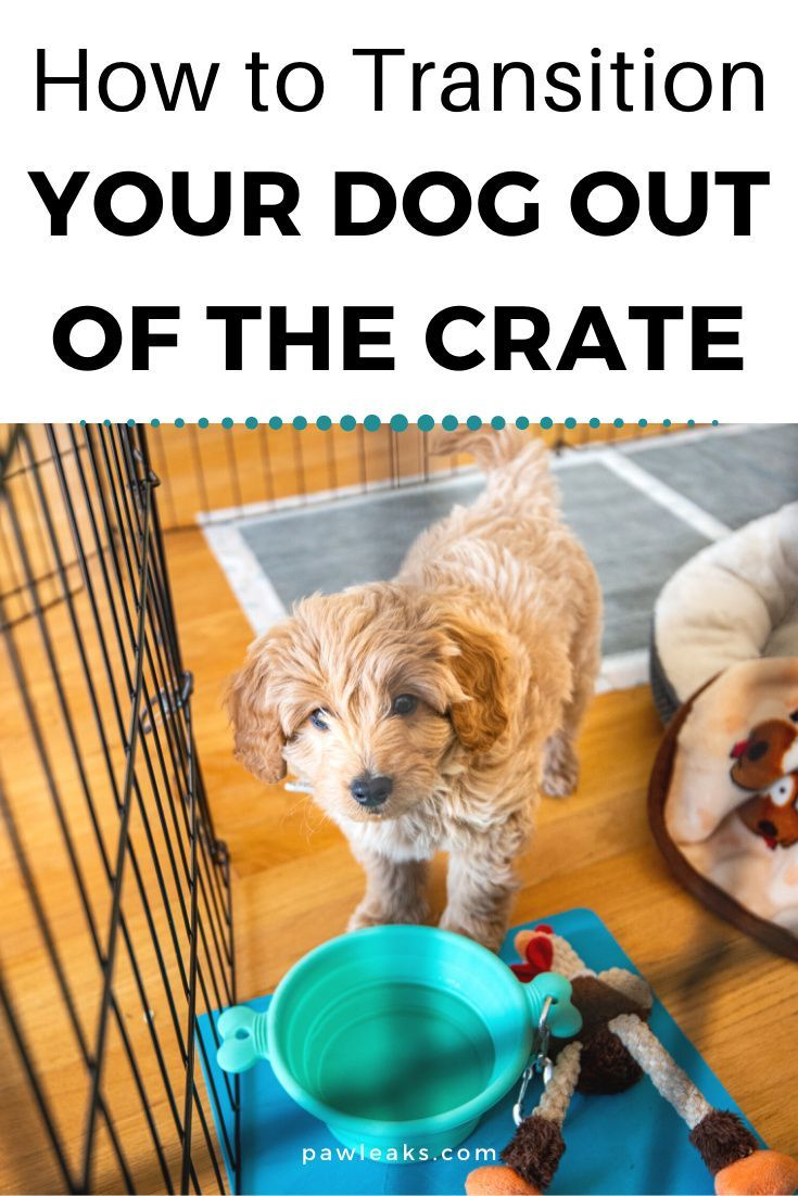 How To Transition Your Dog Out Of The Crate Crate Training Dog Puppy Training Puppies
