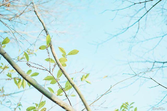 Spring Has Come 実家の庭の木に新芽がまた新たな季節の始まりだなぁとほっこり 空 青空 誰かに見せたい空 空が好き 風景 自然 緑 植物 景色 春 木 Spring Bluesky Nature Green カメラ 一眼レフ 写真好きな人と繋が 植物栽培 庭 新芽