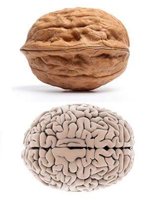 Do Calories Matter? Is a Calorie a Calorie? (Science of ...