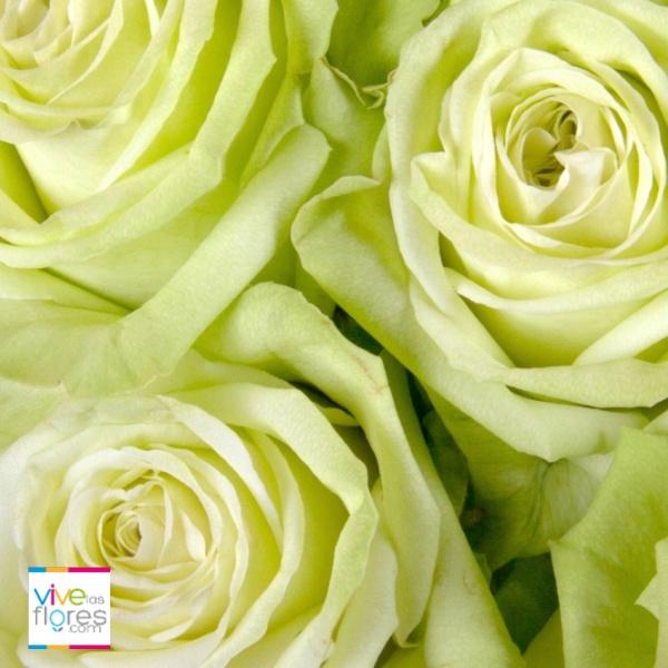Esperanza, descanso, juventud y equilibrio...algunos de los mensajes que las rosas de vivelasflores.com pueden ayudarte a expresar.