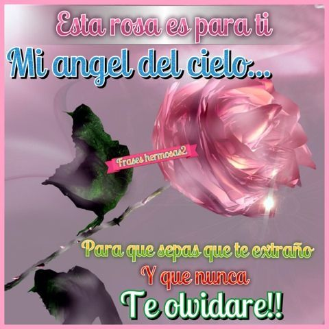 ღღfrases hermosasღღ: Para mi angel en el cielo.