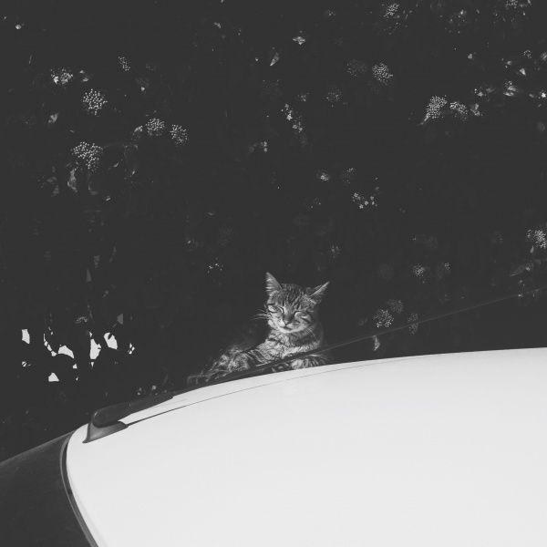 #cat #black   nazliuygur | VSCO Grid™