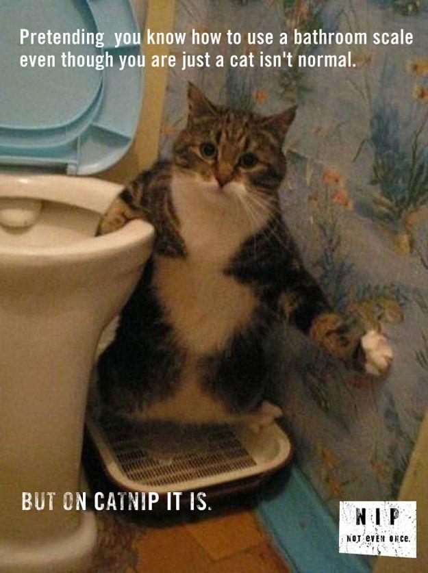 Important Catnip Psas