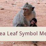 Ape Tea Leaf Symbol Meaning