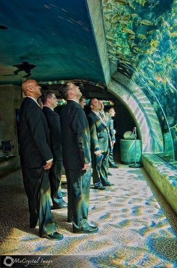 Groomsmen Underwater    Amazing wedding photos at the Florida Aquarium