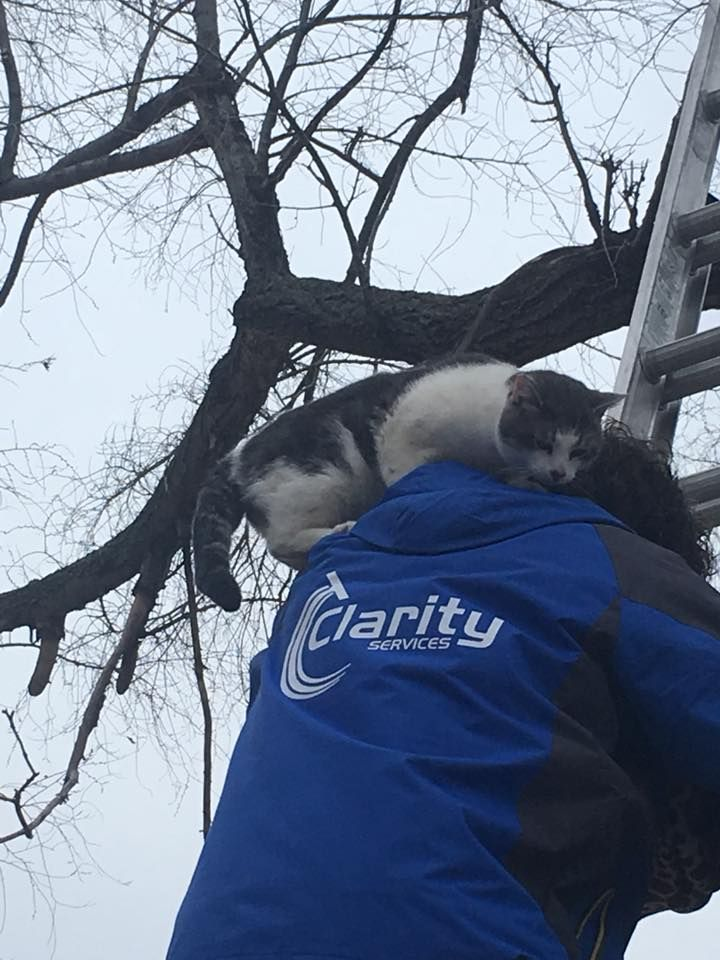 When nobody else would help, a caring window cleaner came to the rescue of a cat who had been stuck in a tall tree for 24 hours in Lincoln, Nebraska this week. Local resident Rainee Penfield first discovered the poor, frightened cat at 11am on Tuesday morning, when she heard a desperate meowing coming from …